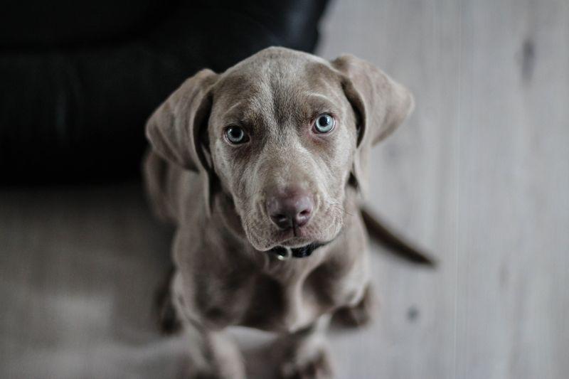 Pes a hypnotizujúci pohľad