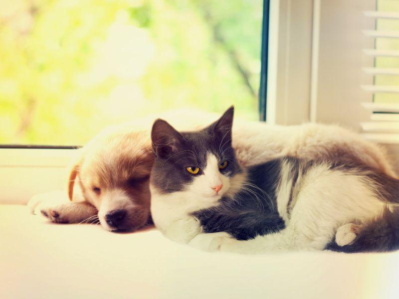 Pes a mačka v domácnosti