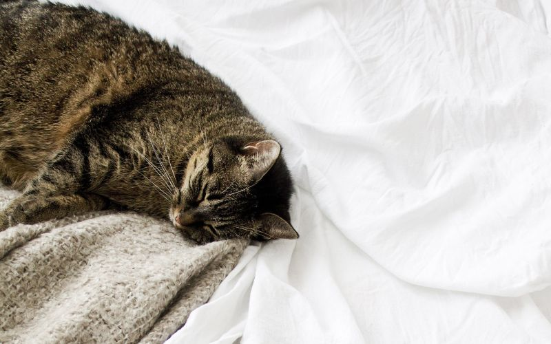 Mačka oddychuje v posteli