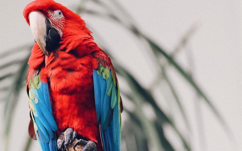 Červený papagáj na strome