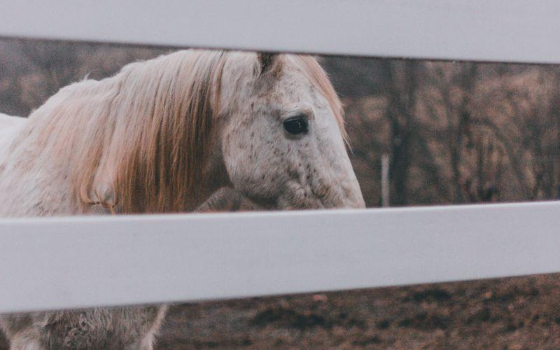 Biely kôň v ohrade