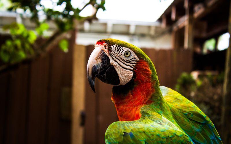 Farebný papagáj