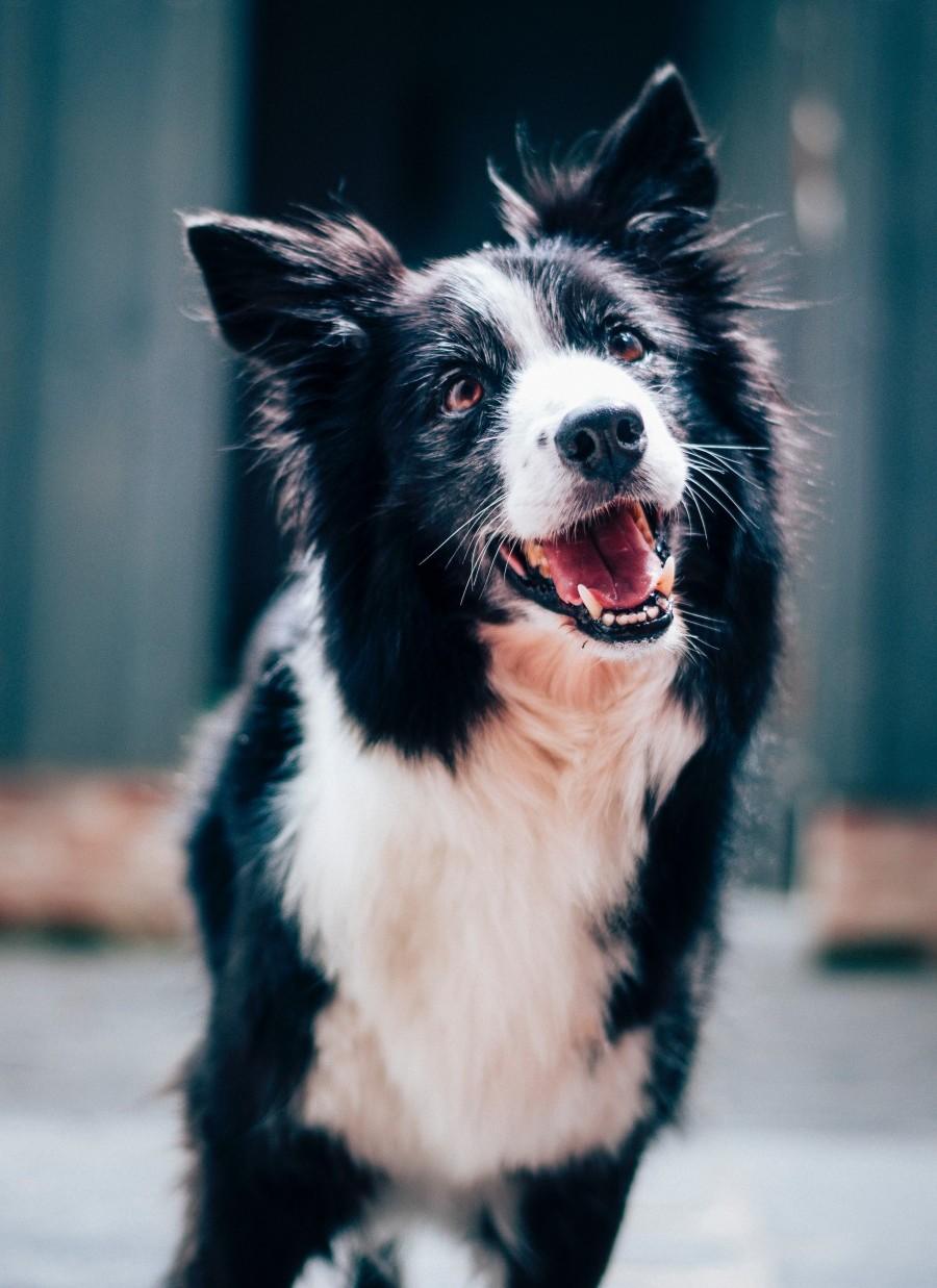 Šťastný psík