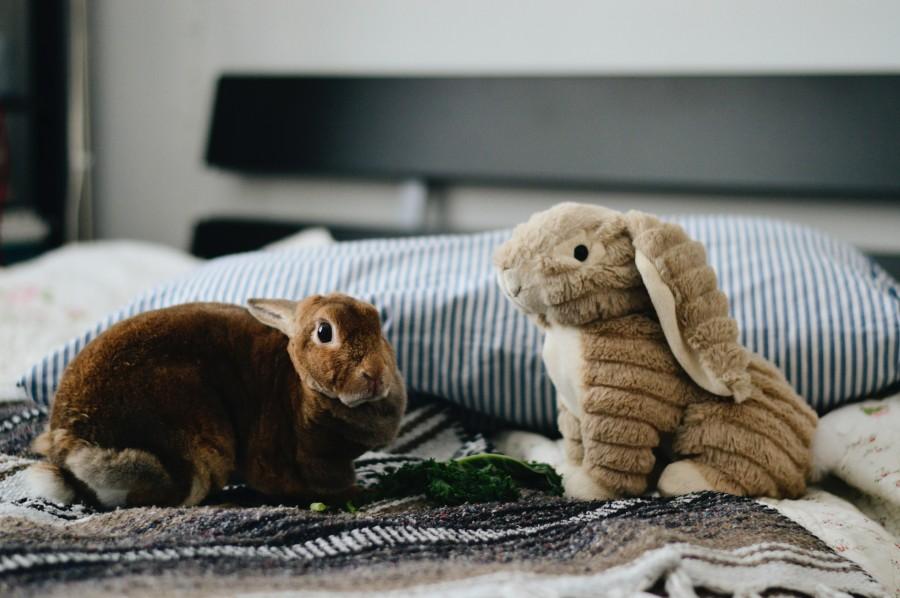 Hračka pre zajaca